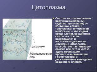 Цитоплазма Состоит из: плазмалеммы ( наружной мембраны), отделяет цитоплазму