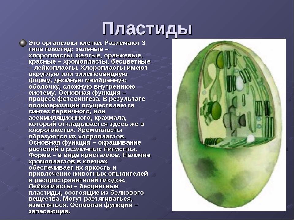 Пластиды Это органеллы клетки. Различают 3 типа пластид: зеленые – хлоропласт...