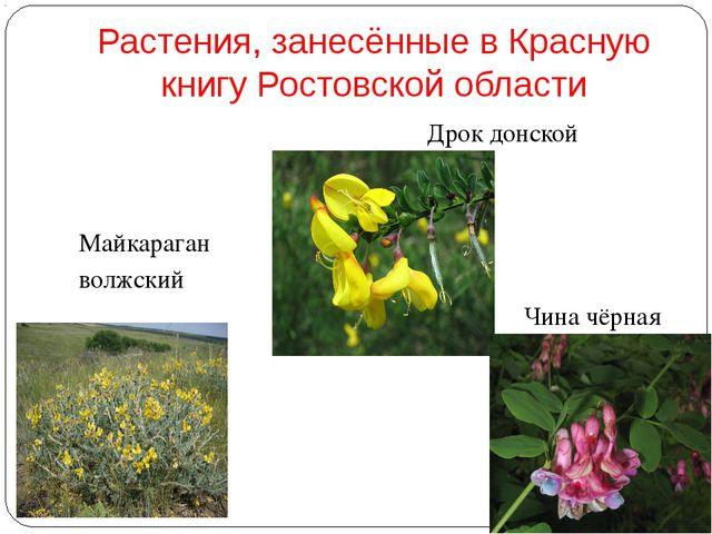 Растения, занесённые в Красную книгу Ростовской области Майкараган волжский...
