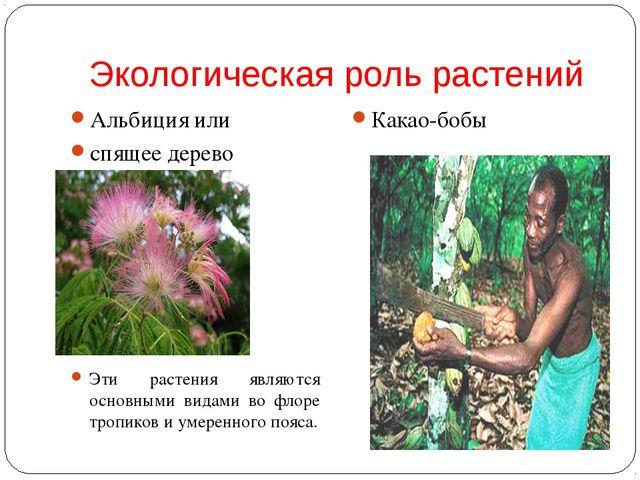 Экологическая роль растений Альбиция или спящее дерево Эти растения являются...
