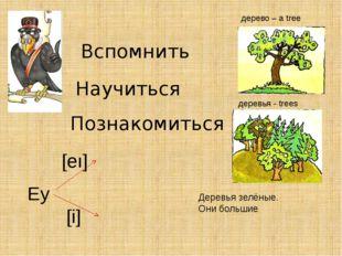 Вспомнить Научиться Познакомиться дерево – a tree деревья - trees Деревья зел