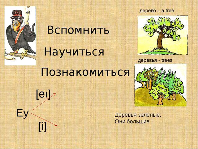 Вспомнить Научиться Познакомиться дерево – a tree деревья - trees Деревья зел...
