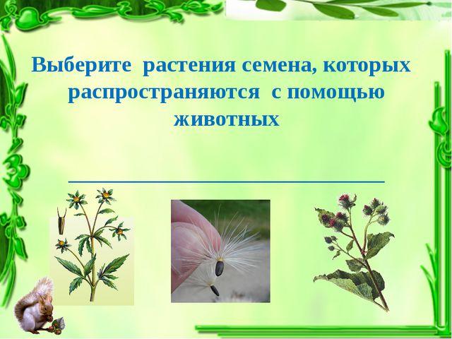 Выберите растения семена, которых распространяются с помощью животных _______...