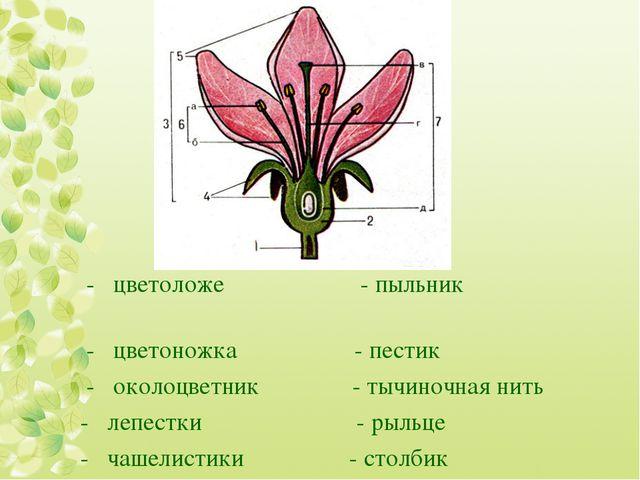 - цветоложе - пыльник - цветоножка - пестик - околоцветник - тычиночная нить...
