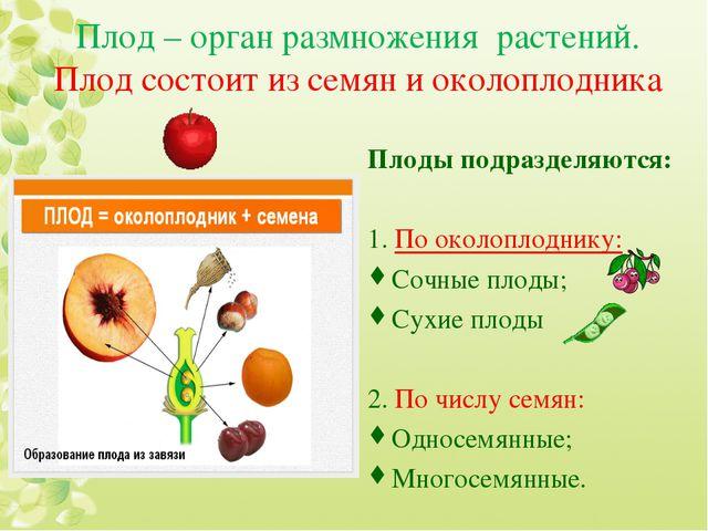 Плод – орган размножения растений. Плод состоит из семян и околоплодника Плод...