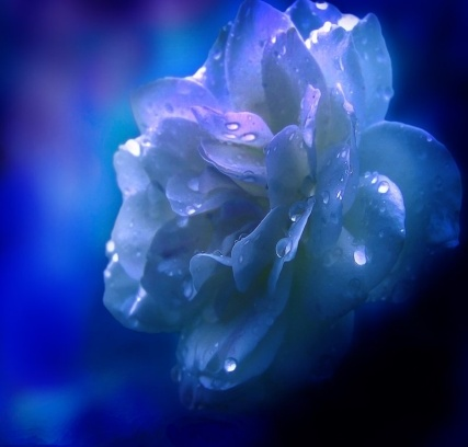 Синий цветок для пояснит