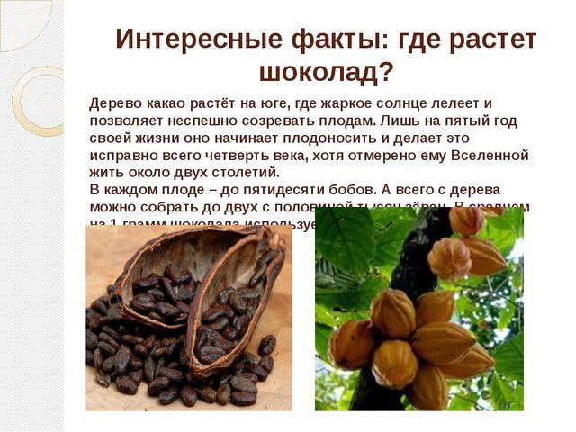 Интересные факты: где растет шоколад? Дерево какао растёт на юге, где жаркое...