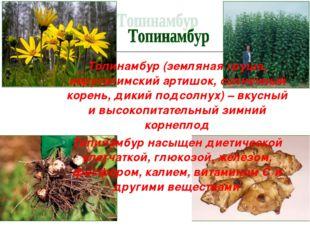 Топинамбур (земляная груша, иерусалимский артишок, солнечный корень, дикий по