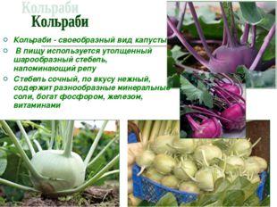 Кольраби - своеобразный вид капусты В пищу используется утолщенный шарообразн