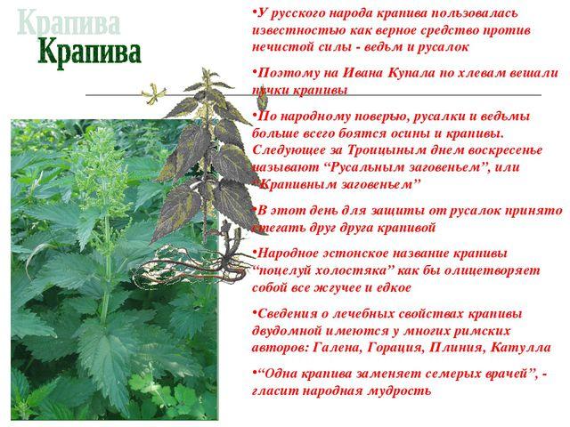 У русского народа крапива пользовалась известностью как верное средство проти...
