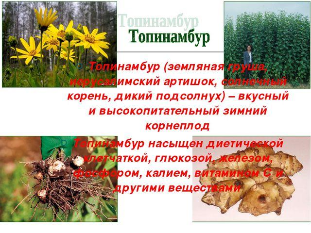 Топинамбур (земляная груша, иерусалимский артишок, солнечный корень, дикий по...