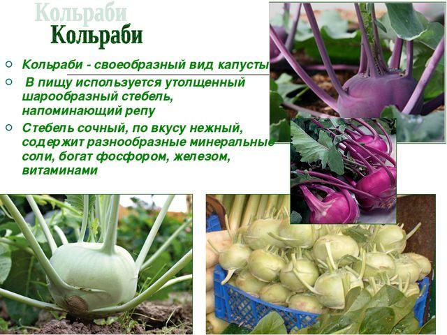Кольраби - своеобразный вид капусты В пищу используется утолщенный шарообразн...