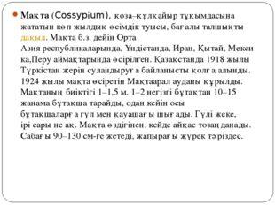 Мақта(Cossypіum), қоза–құлқайыр тұқымдасына жататын көп жылдық өсімдік туысы
