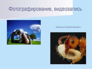 Фотографирование, видеозапись Микрофотография муравья