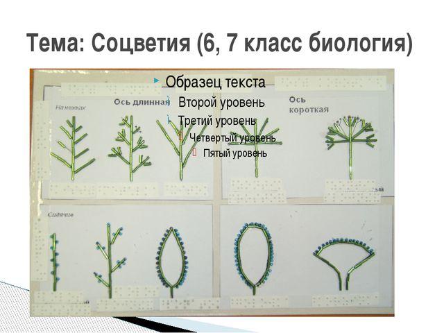 Тема: Соцветия (6, 7 класс биология)