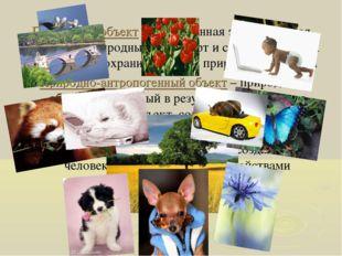 Природный объект – естественная экологическая система, природный ландшафт и с