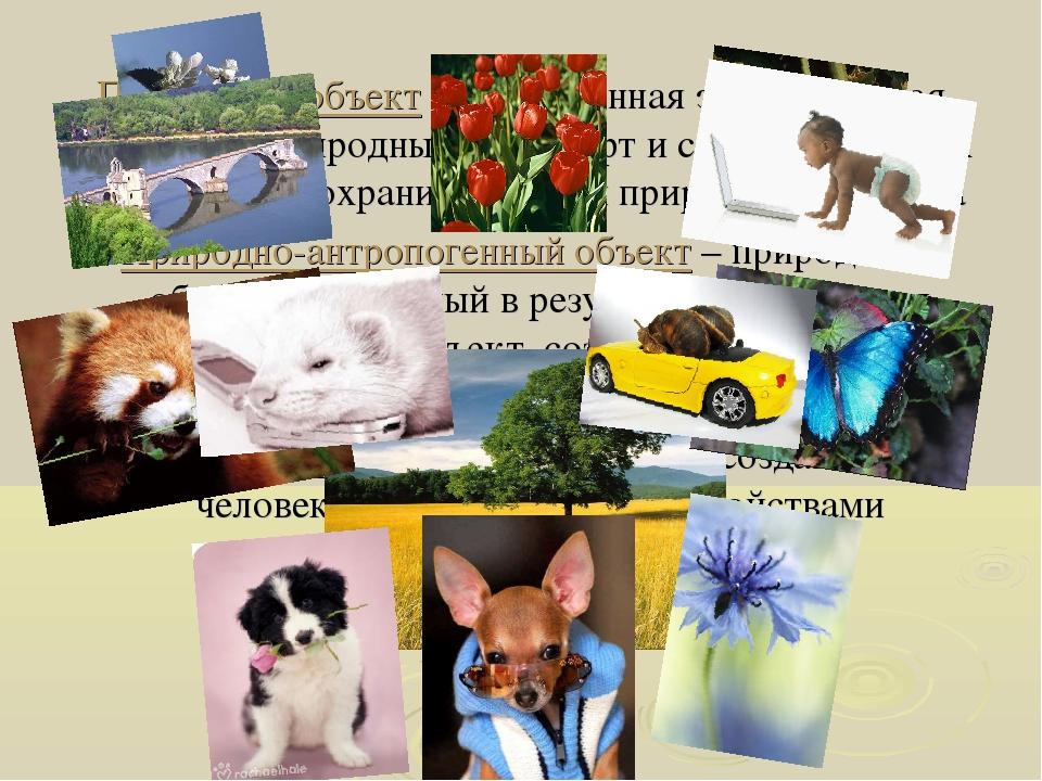Природный объект – естественная экологическая система, природный ландшафт и с...