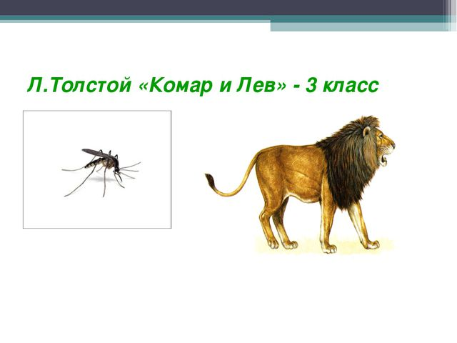 Л.Толстой «Комар и Лев» - 3 класс