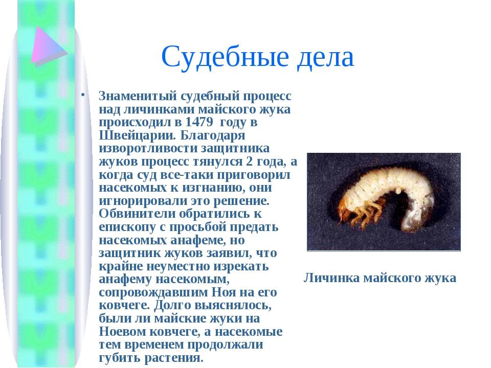 Судебные дела Знаменитый судебный процесс над личинками майского жука происх...