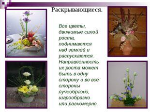 Раскрывающиеся. Все цветы, движимые силой роста, поднимаются над землей и рас
