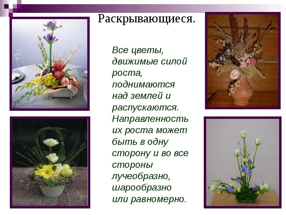 Раскрывающиеся. Все цветы, движимые силой роста, поднимаются над землей и рас...