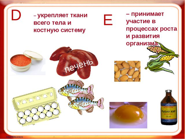 D Е печень – укрепляет ткани всего тела и костную систему – принимает участие...