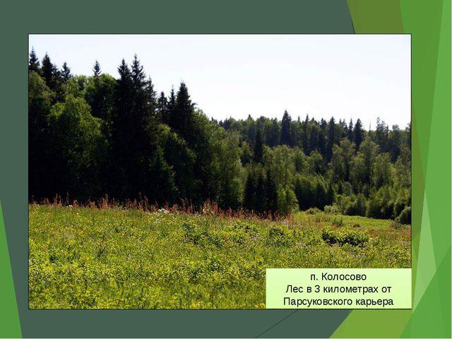 п. Колосово Лес в 3 километрах от Парсуковского карьера
