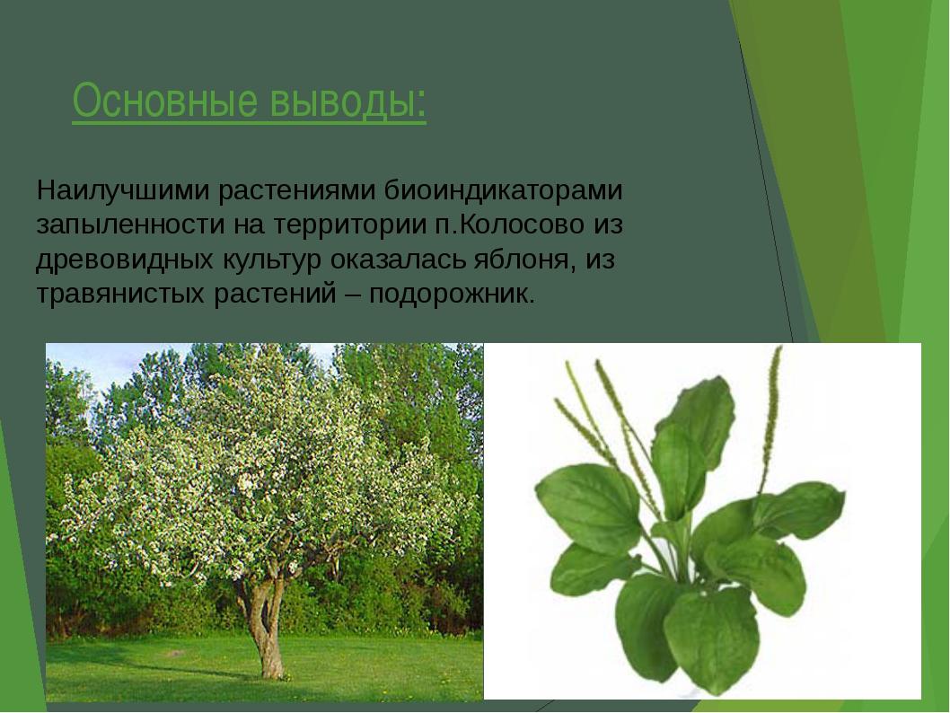 Основные выводы: Наилучшими растениями биоиндикаторами запыленности на террит...