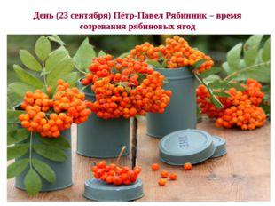 День (23 сентября) Пётр-Павел Рябинник – время созревания рябиновых ягод