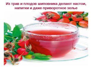 Из трав и плодов шиповника делают настои, напитки и даже приворотное зелье