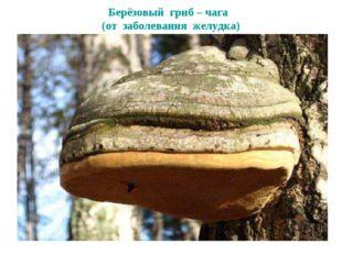 Берёзовый гриб – чага (от заболевания желудка)