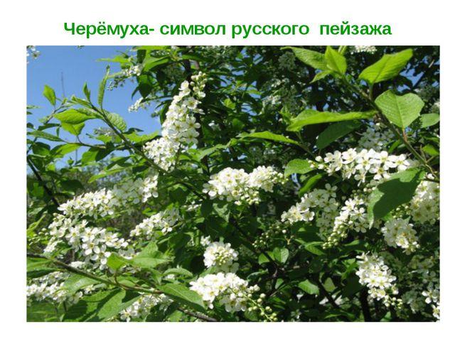 Черёмуха- символ русского пейзажа
