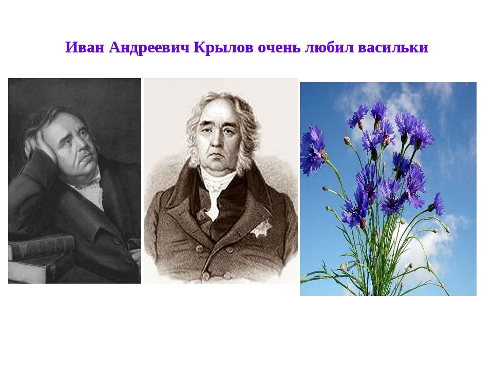 Иван Андреевич Крылов очень любил васильки