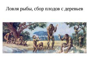 Ловля рыбы, сбор плодов с деревьев