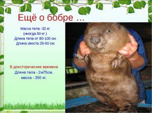 Масса тела -32 кг. (иногда 50 кг.) Длина тела от 80-100 см. Длина хвоста 25-5