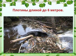 Плотины длиной до 6 метров.