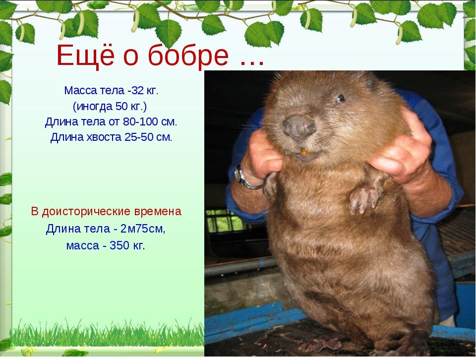 Масса тела -32 кг. (иногда 50 кг.) Длина тела от 80-100 см. Длина хвоста 25-5...