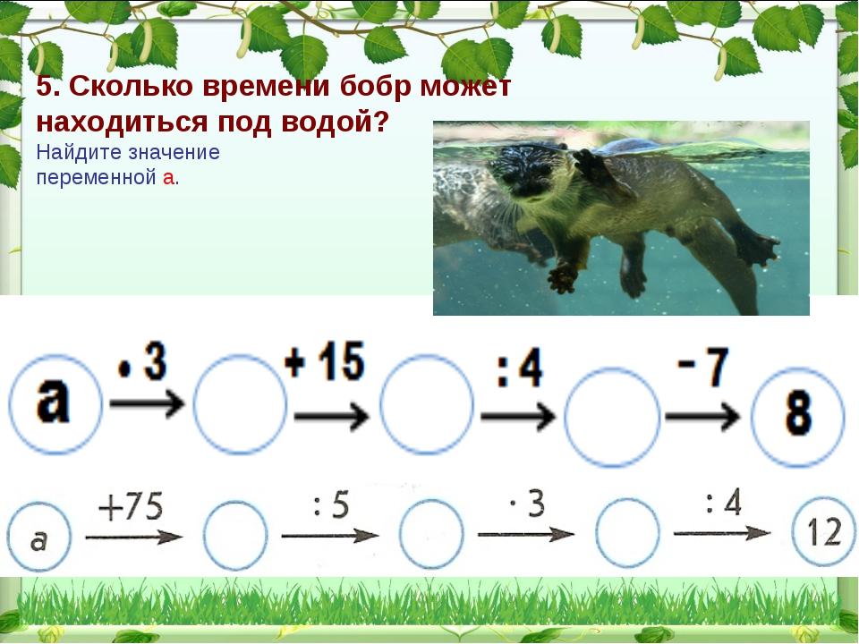 5. Сколько времени бобр может находиться под водой? Найдите значение переменн...