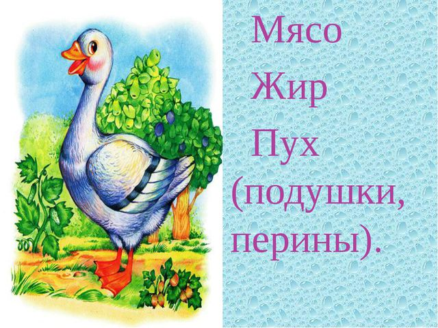 Мясо Жир Пух (подушки, перины).