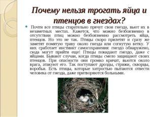 Почему нельзя трогать яйца и птенцов в гнездах? Почти все птицы старательно