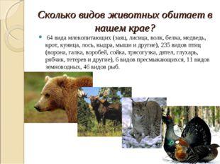 Сколько видов животных обитает в нашем крае? 64 вида млекопитающих (заяц, лис