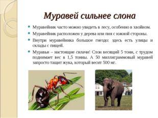 Муравей сильнее слона Муравейник часто можно увидеть в лесу, особенно в хвойн