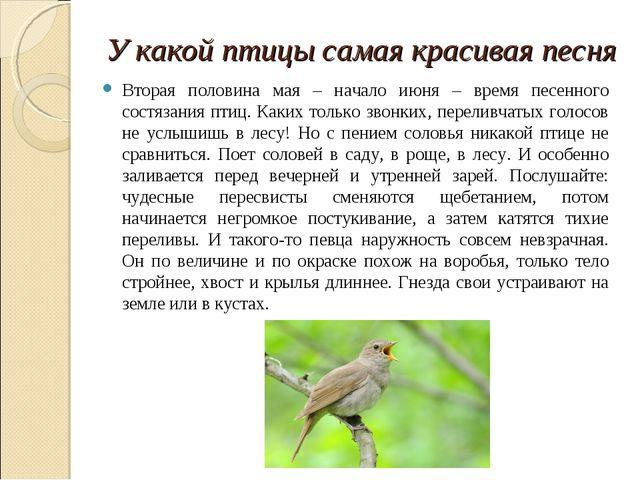 У какой птицы самая красивая песня Вторая половина мая – начало июня – время...