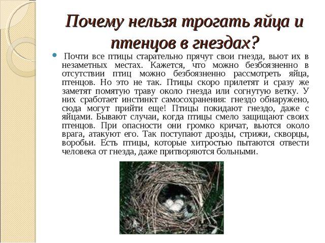 Почему нельзя трогать яйца и птенцов в гнездах? Почти все птицы старательно...