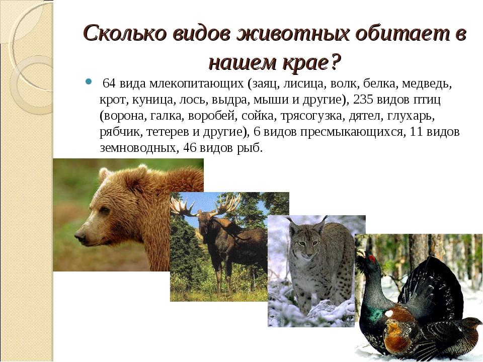 Сколько видов животных обитает в нашем крае? 64 вида млекопитающих (заяц, лис...