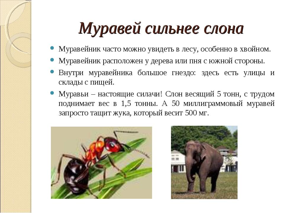 Муравей сильнее слона Муравейник часто можно увидеть в лесу, особенно в хвойн...