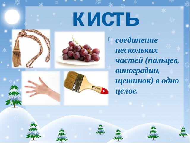 кисть соединение нескольких частей (пальцев, виноградин, щетинок) в одно целое.