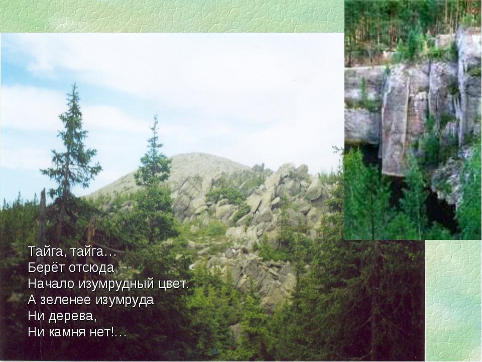 Тайга, тайга… Берёт отсюда Начало изумрудный цвет. А зеленее изумруда Ни дере...