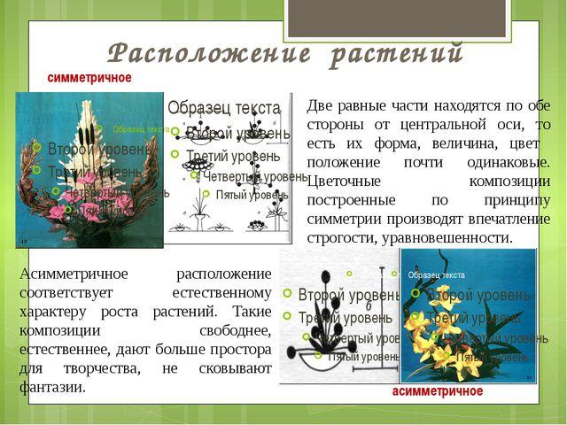 Расположение растений симметричное асимметричное Две равные части находятся п...