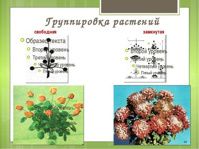 Группировка растений свободная замкнутая